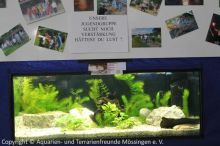 Jugend_Aquarium