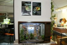 Fernseher_Aquarium_Leihgabe_Regenwaldtage_3