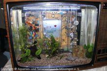 Fernseher_Aquarium_Leihgabe_Regenwaldtage_2