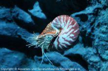 05-Nautilus