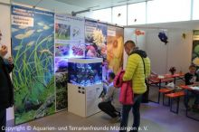 Fisch-und-Reptil-2017_Verein_10