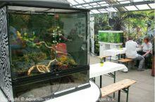01_RWT6_Paludarium-und-Aquarium-unseres-Vereins