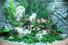 07_Schauaquarium_auf_der_Aqua-Fisch