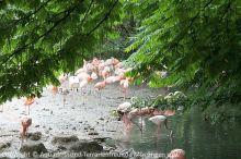 00_Flamingos__Hellabrunn_2018