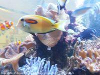 Pflege_Kinderklinik-Aquarium_April2018_08