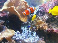 Pflege_Kinderklinik-Aquarium_April2018_07
