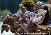 Aquarium_Heinz_08