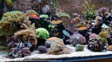 Aquarium_Heinz_16