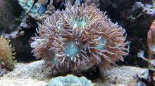 Aquarium_Heinz_02